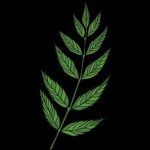 Image for Lina Sandell – Fröderyd
