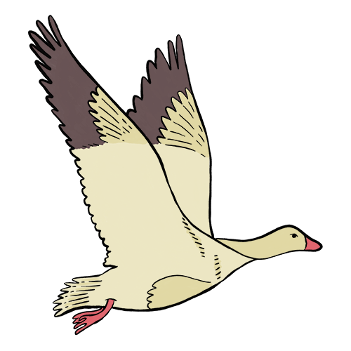 Image for Selma Lagerlöf – Tabergs topp